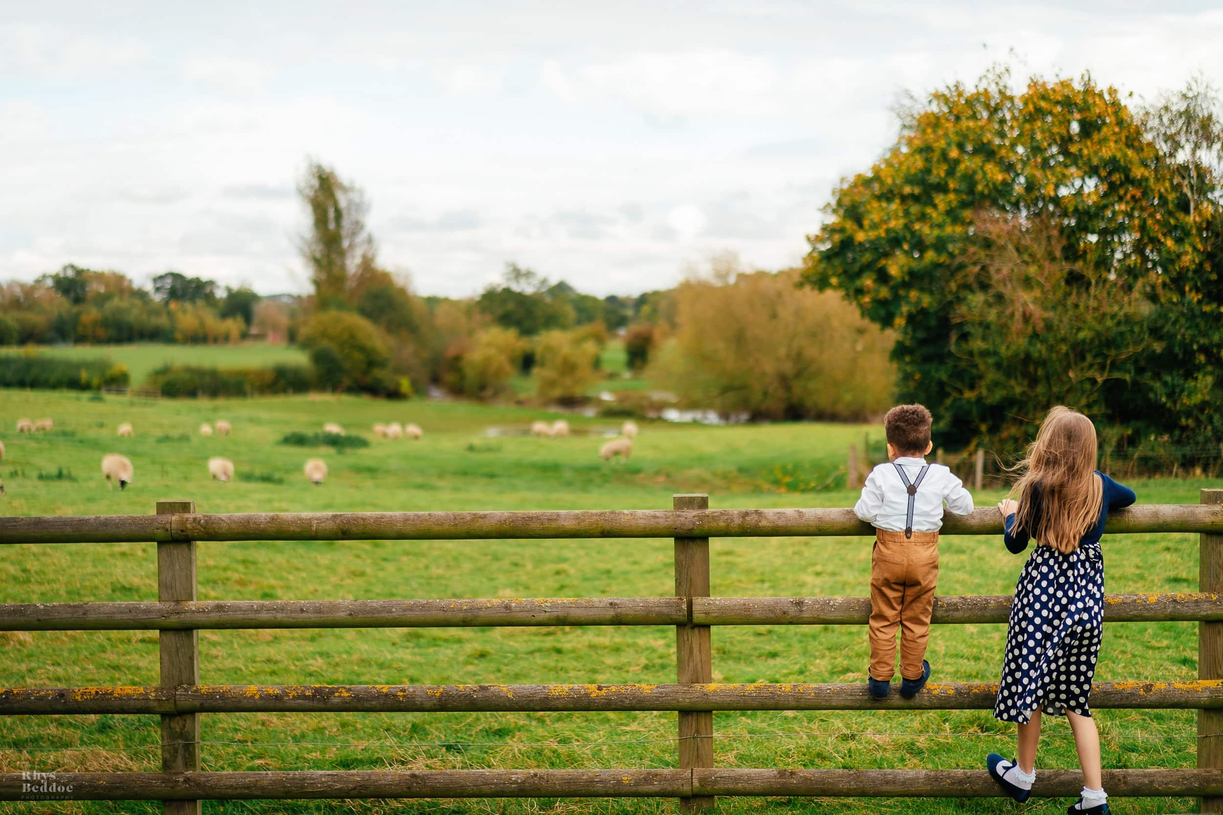 Child climbing on the fence to look at sheep